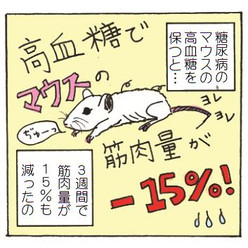 糖尿病マウスの筋肉量が減少する