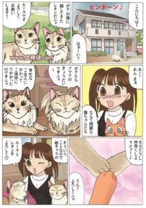 美しすぎるソマリ猫が登場する漫画
