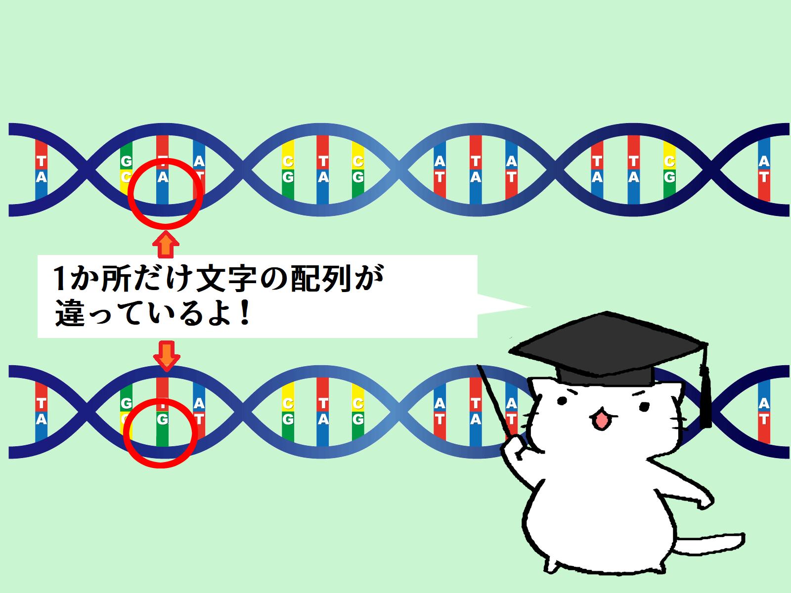 遺伝子の文字配列のわずかな違い