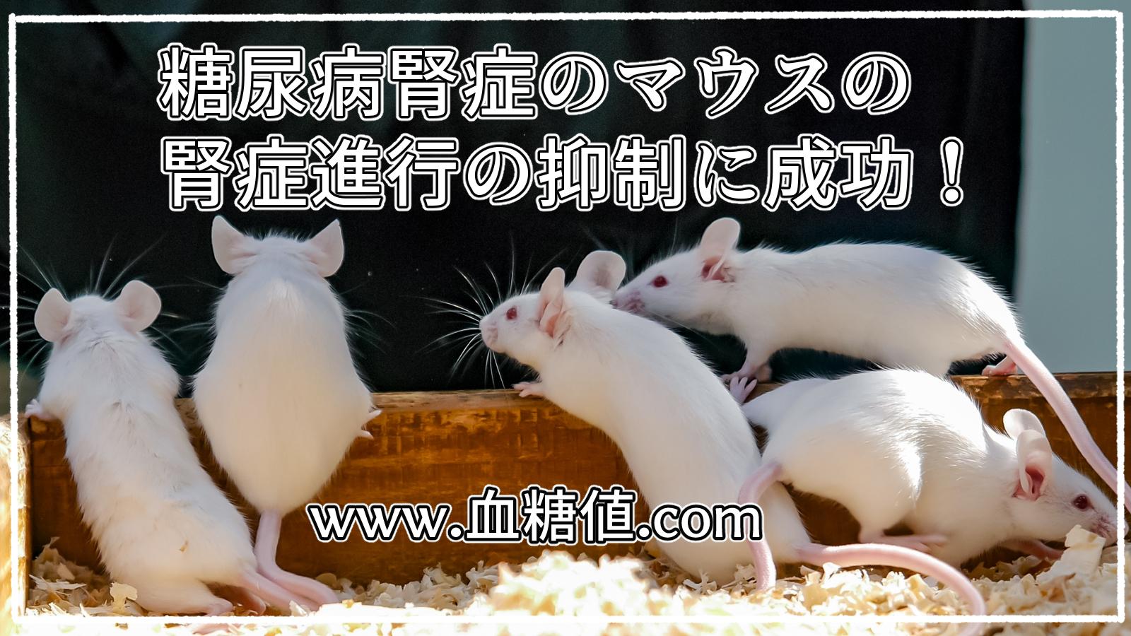 糖尿病腎症のマウスの腎症進行の抑制に成功